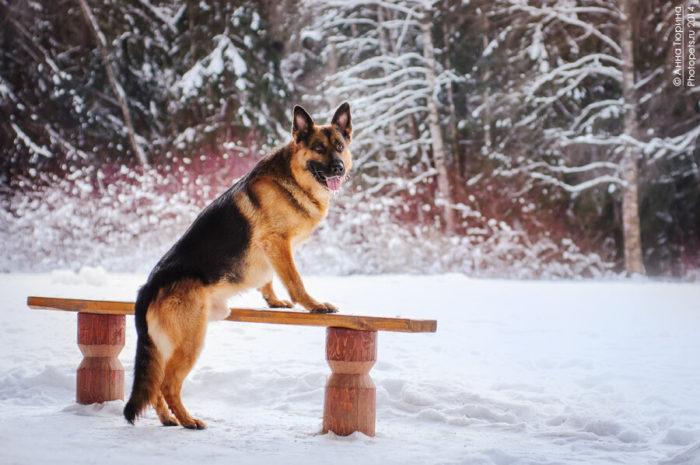 От хозяина собаки