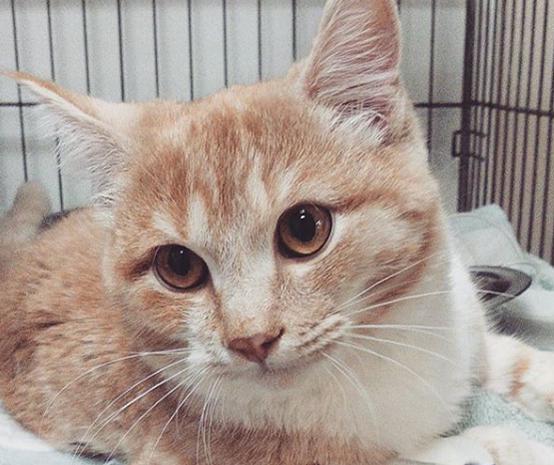 Вторичный гиперпаратиреоз котят.