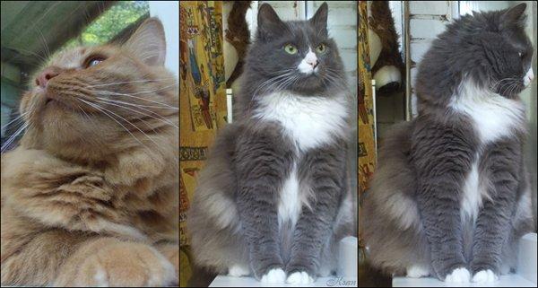 Мои коты, выдержки