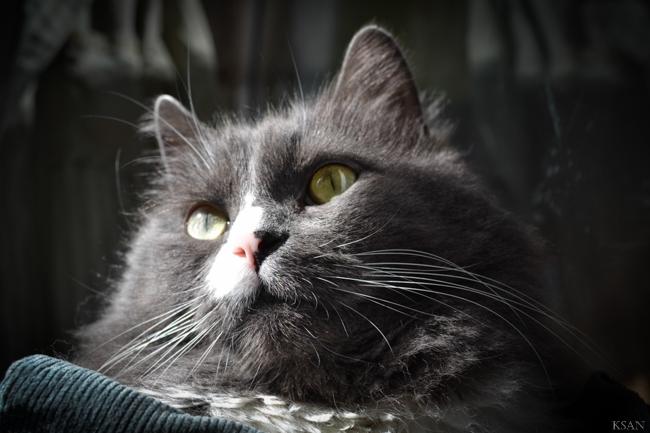 Дневник кота. Отрывок («щенок в доме = катастрофа!»)
