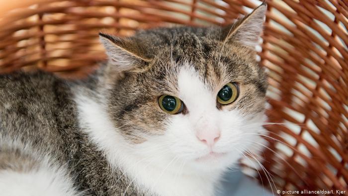 «Это же всего лишь кошка»