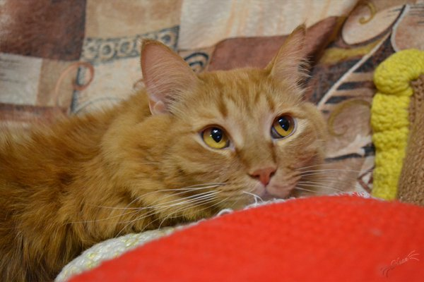 Рыжий, мой сладкий котик