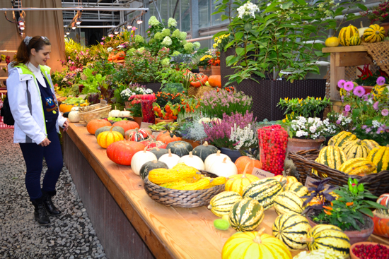 Осенняя выставка в Аптекарском огороде