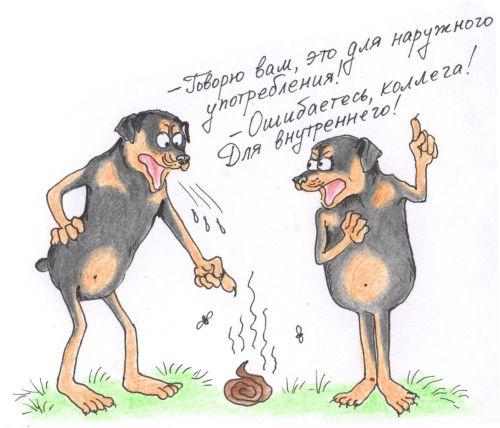Почему собаки едят кал