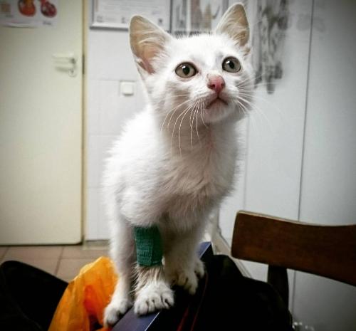 Котята, инфекции и немного молока