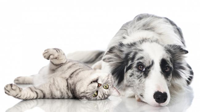 Вакцинация и дегельминтизация животных