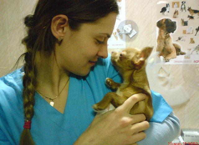 Полгода в качестве ветеринарного врача.