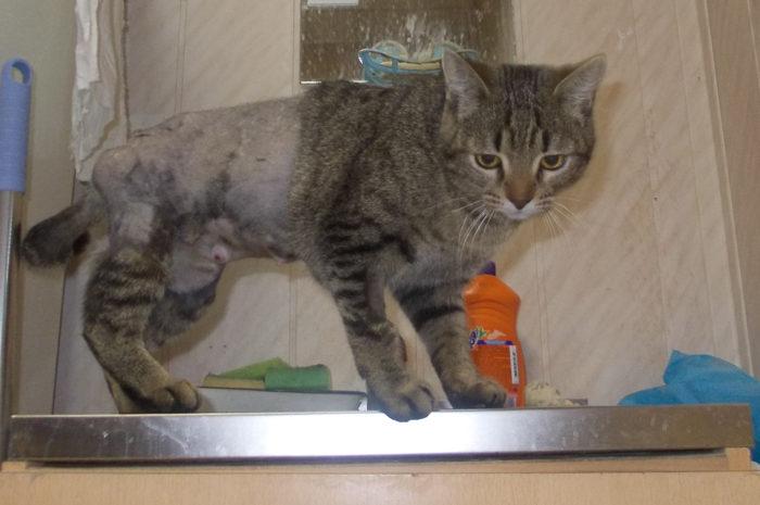 «Кошка — паззл» сентябрь — октябрь 2011 г.