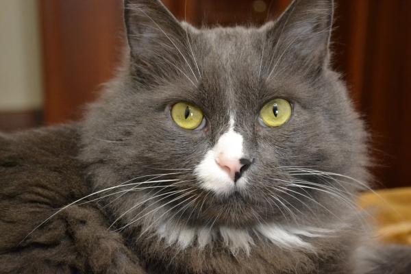 1 марта — день Кошек в России!