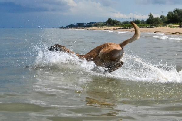 На море с собакой. Личный опыт.