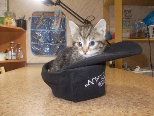 Кошки, токсоплазмоз и беременность