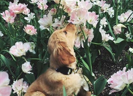 Весна и собаки