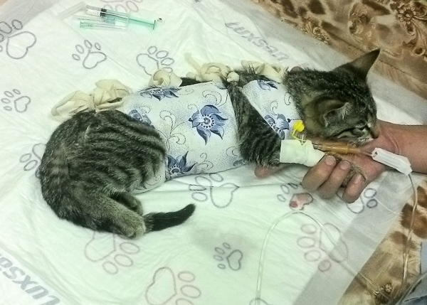 Котёнок, который кушал свитер