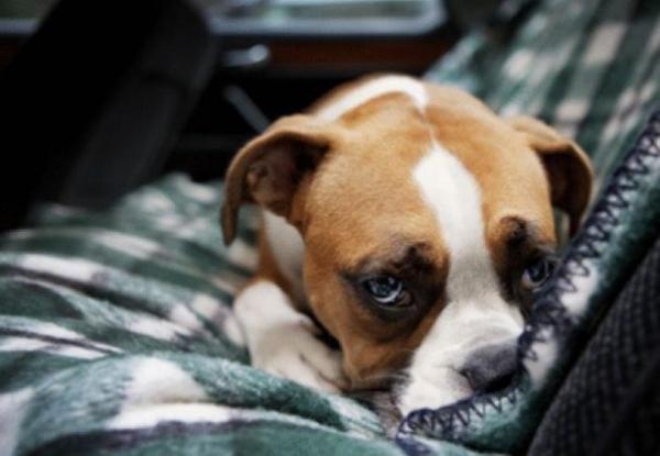 Признаки боли у собак