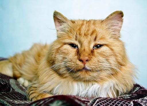 Кошки и старость. Как жить долго и счастливо?