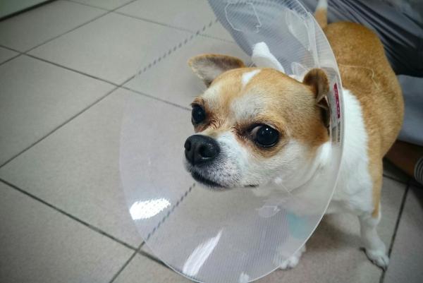 Первая помощь животным при ранениях