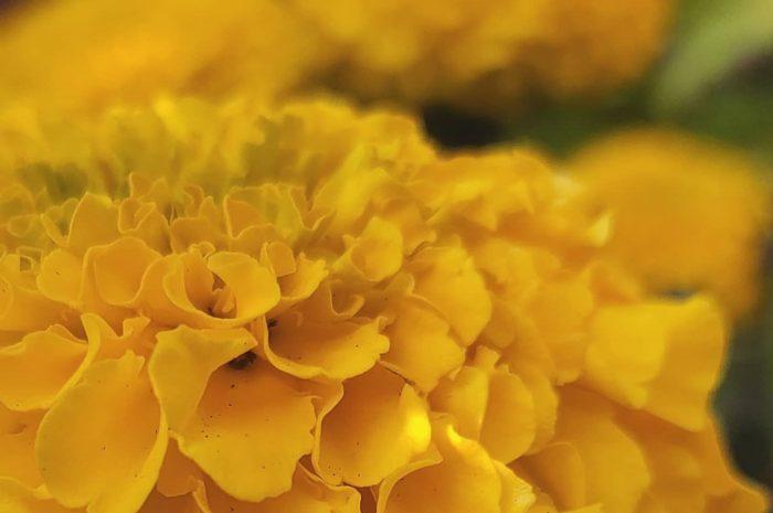 Галерея: мои первые цветы.